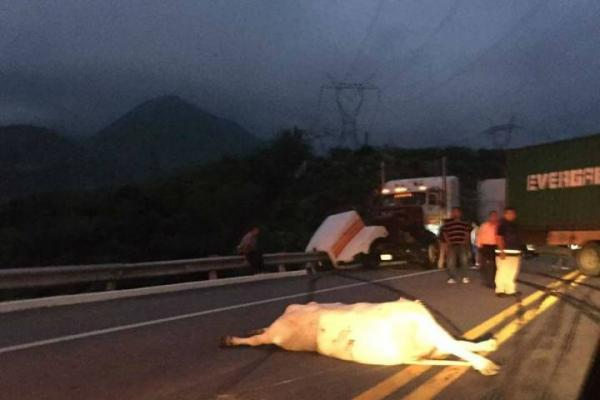 Accidente bloquea autopista en Arteaga
